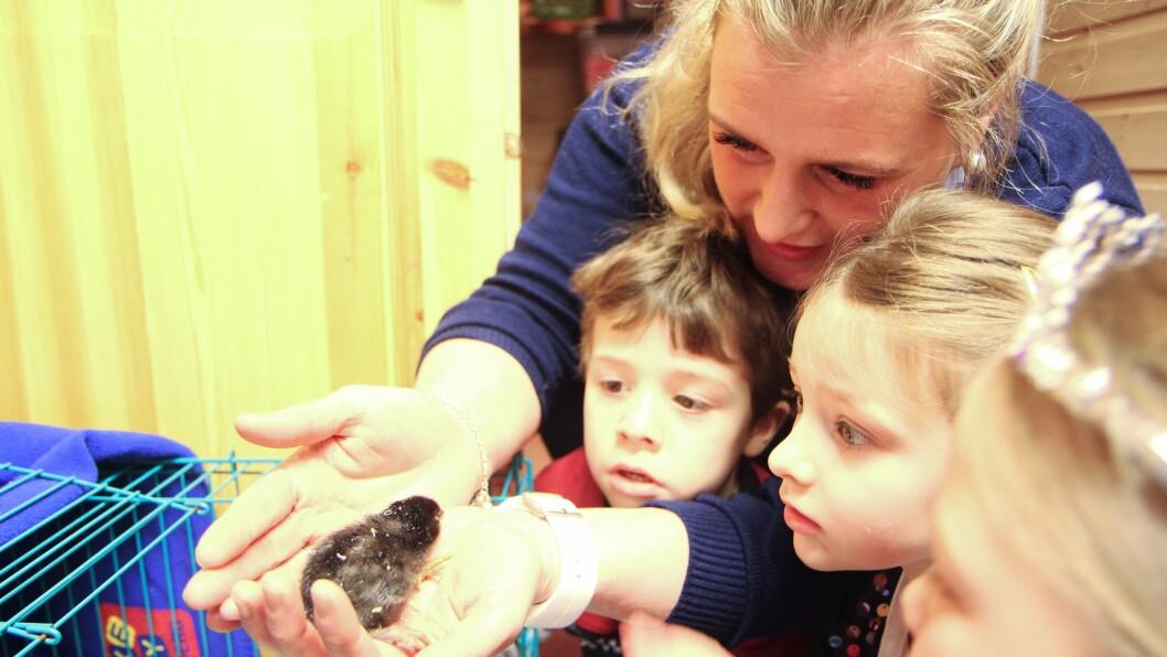 Pedagogisk leder Christine Klette viser ungene i Kjeldmyrlia Norlandia barnehage i Bodø, hvor forsiktig man må være med nyklekkede kyllinger.