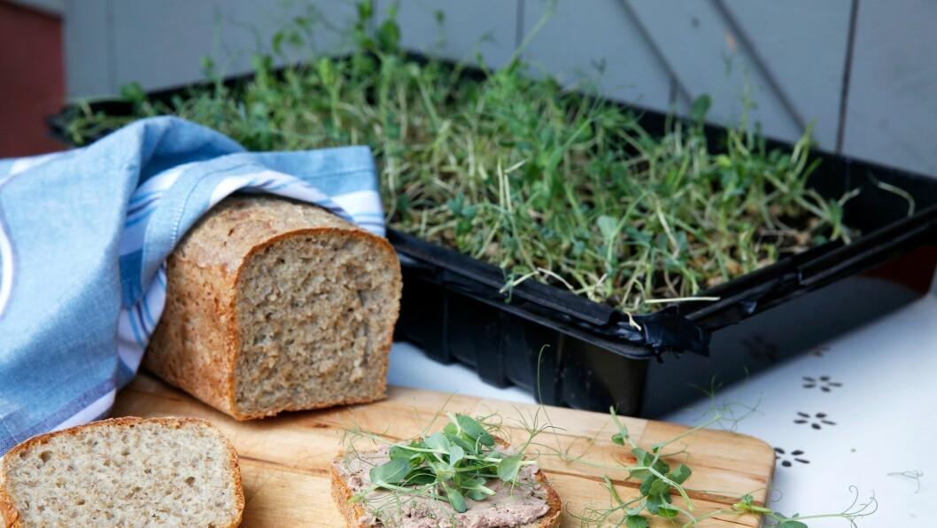 Denne halvgrove deigen er god både til brød og rundstykker.