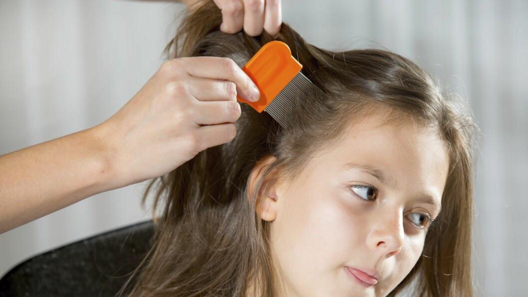 Folkehelseinstituttet anbefaler at barn sjekkes for hodelus minst én gang i måneden.