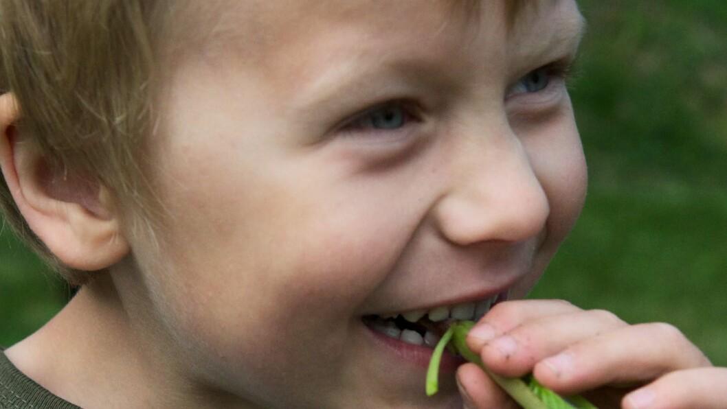 Står plantene for tett, kan barna bare spise etter hvert. De synes det er morsomt å spise det de dyrker selv.
