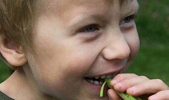 Slik kan barnehagen dyrke maten selv