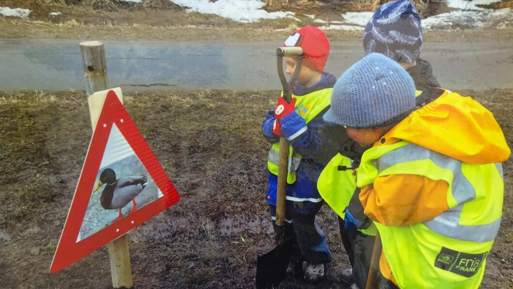Ungene i Ytteren miljøbarnehage laget skilt og satte det opp for å få bilister til å kjøre forsiktig forbi der stokkand-paret har bosatt seg.