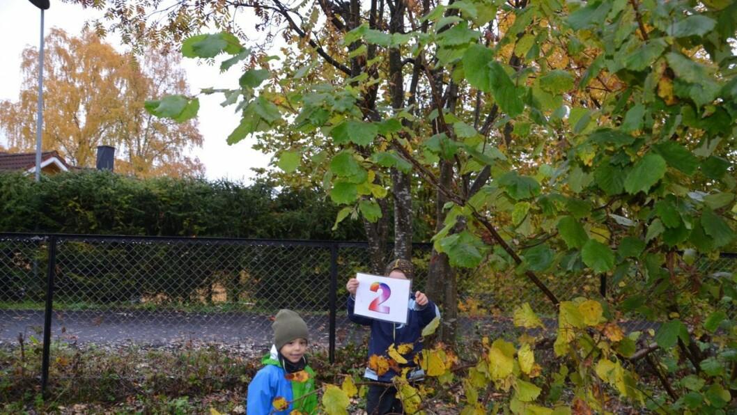 Det er artig å lete etter tall blant busker og trær.