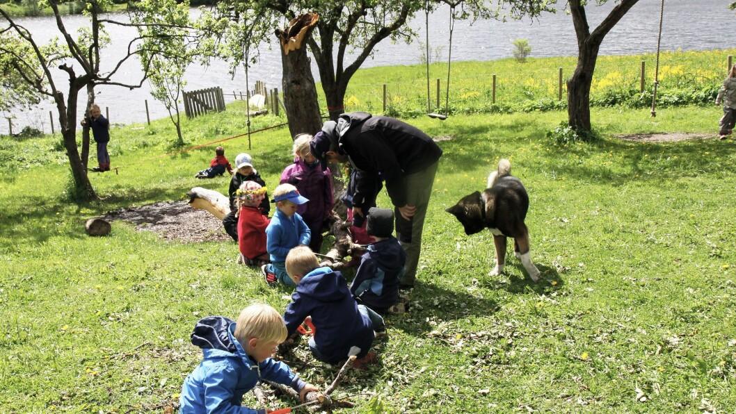 Akitaen Rugby (6,5) følger spent med på barna som sager i et nedblåst tre.