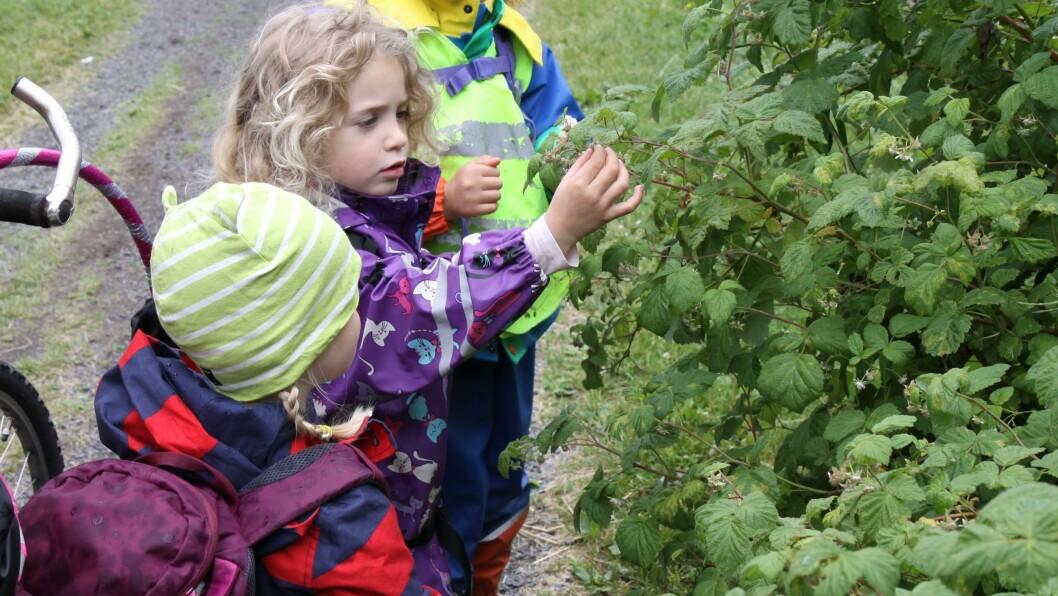 Barna i Margarinfabrikken utforsket livet i Geitmyra skolehage sammen med gartner Liv Derås Bjørnstad.