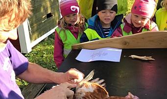 – Bare sunt for barna å se hvordan man bruker dyr til mat