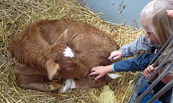 – Barna må lære at melka kommer fra kua og ikke kjøledisken