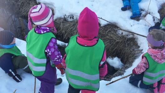 Barna fisker i Lurveleggbekken.