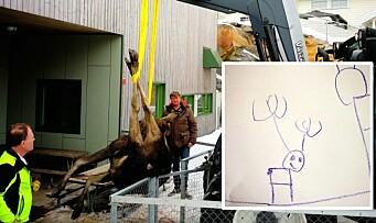 Elgen falt av taket og måtte avlives: – Nå har vi fått dilla på elg