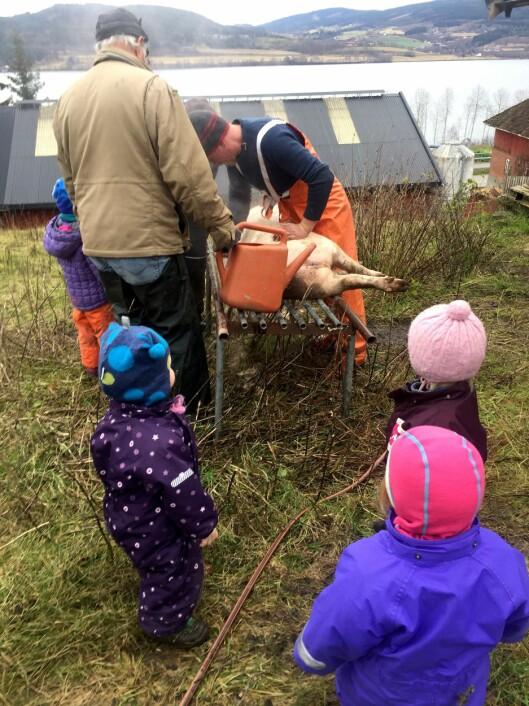 I løpet av et år er barna i Nordby Gardsbarnehage med på de ulike hendelsene som skjer på gården.
