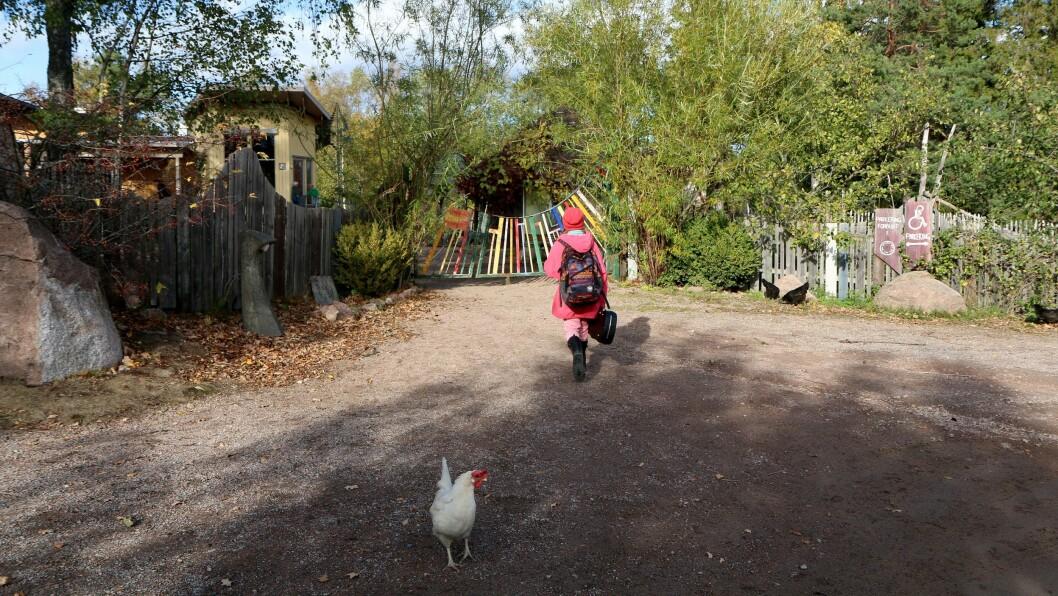 Skoledagen til førsteklassingene varer fra klokken 8.40 til 13.45. Askeladden Steinerbarnehage huser også både SFO og en liten høneflokk.