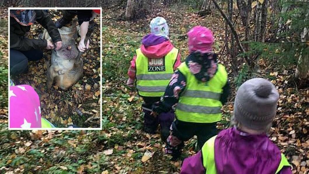 Barna i Eidskog narturbarnehage får være med på jakt.