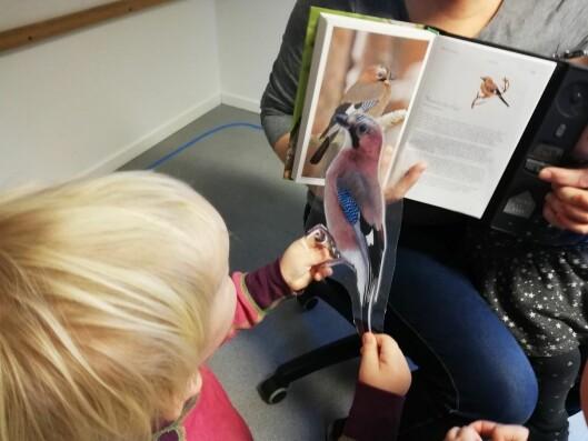 – Barna blir aldri ferdige med fugler. Det kommer stadig nye spørsmål og de lærer seg nye arter, forteller daglig leder Bjørg Irene Lehn i Røysing barnehage.