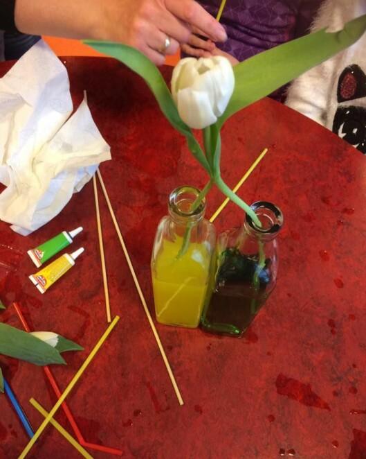På avdeling Askeladden gjorde barna ulike forsøk og undret seg over hva som kanskje kommer til å skje. Vil tulipanene skifte farge til i morgen?