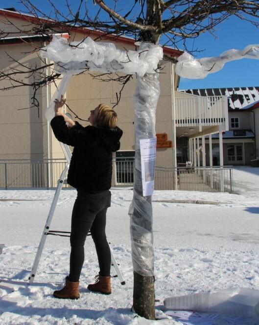 – Alle barnehagene i kommunen har gått sammen og synliggjort årets tema ved å dekorere og pakke inn trær i sentrum, forteller leder Tove Holm i Rabben barnehage.