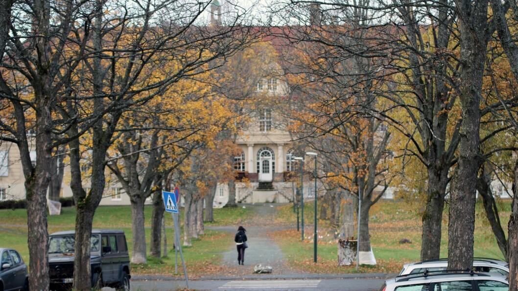 Det totale antallet som har fått tilbud om studieplass på barnehagelærerutdanningen er 4.543 i år, mot 4.378 i 2018 - en økning på 3,8 prosent. Bildet er av DMMH i Trondheim.