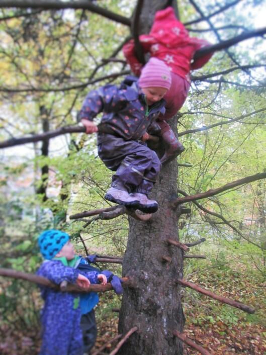 Å klatre i trærne har alltid vært en favorittaktivitet for barna i barnehagen.