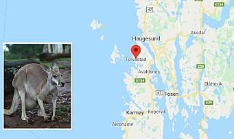 Barnehage plaget av kenguru-avføring