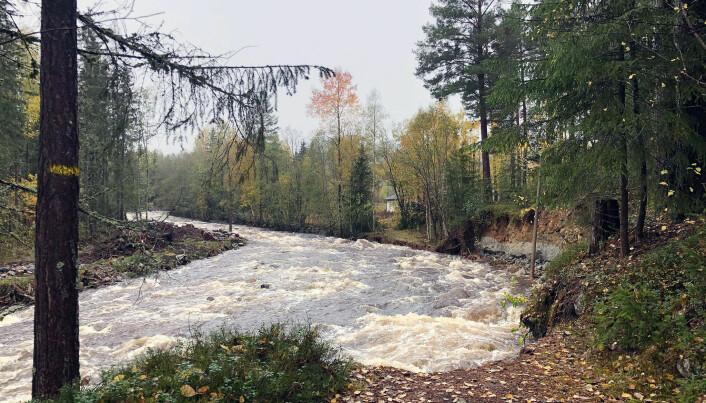 Elva Nørståe er en sideelv til Numedalslågen. Mandag rant den over, og inn i tettstedet Veggli.