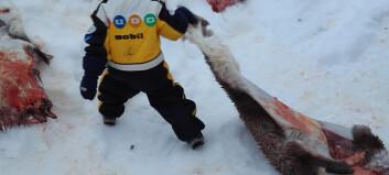 Verdenskjent reinsslakt-barnehage slakter media så blodet spruter!