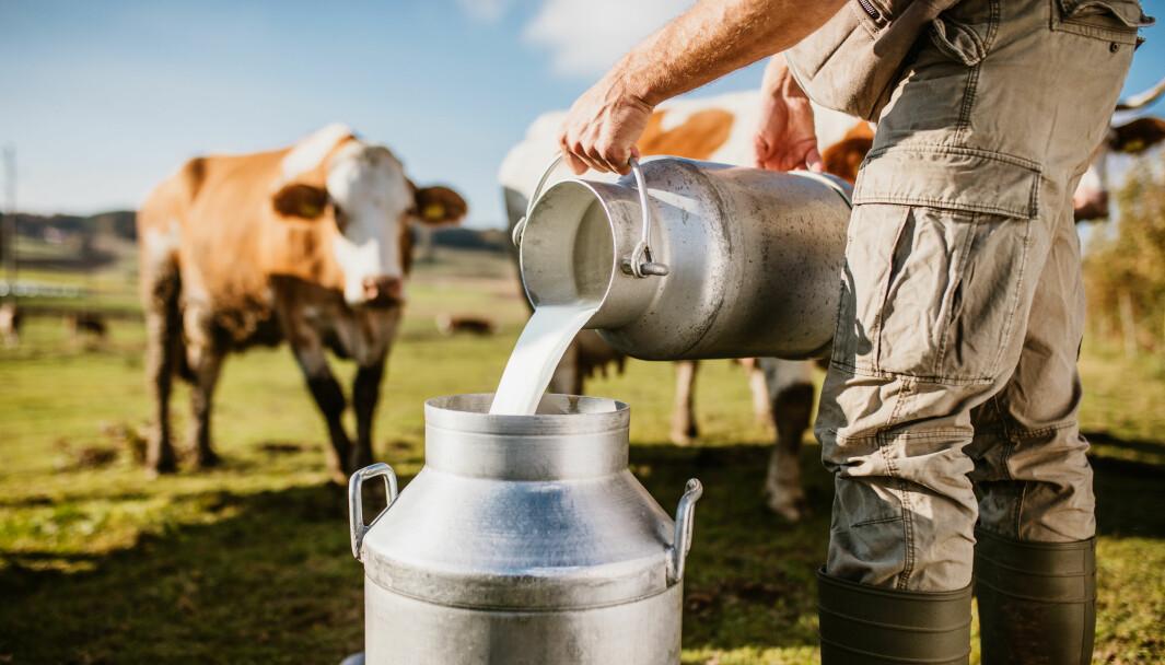 – Å servere rå melk til barnehagebarn som besøker en gård innebærer en risiko og er ikke tilrådelig, opplyser Mattilsynet.
