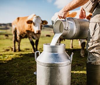 Fikk melk rett fra kua på gårdsbesøk – barna ble syke