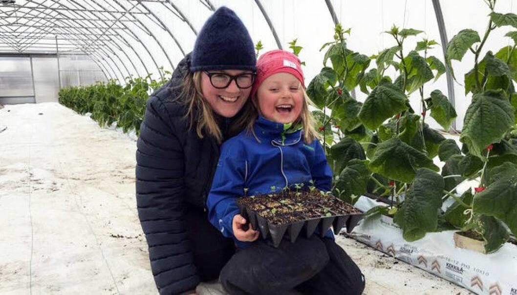 Over 9000 grønnsaksplanter skal deles ut til barnehagene i Innlandet. Plantene klargjøres i drivhuset hos grøntprodusent Louise Gjør.